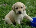 深圳一般去哪个地方买狗 深圳去哪个犬舍买狗比较健康