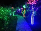上海树木亮化灯光节布展,灯光节出租