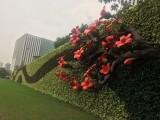 珠海横琴自贸区绿植墙 垂直绿化 立体绿化 花墙 植物墙