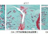 澎立生物医药技术(上海)有限公司专注于骨质疏松模型新市场报价