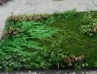 仿真植物墙定做北京植物墙厂家