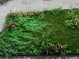 仿真植物墻定做北京植物墻廠家