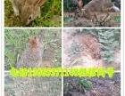 公羊兔 獭兔 塞北兔 比利时兔 伊拉兔 巨型花明兔 德国巨兔