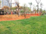 苏州地区园林绿化施工及养护,花卉苗木草坪修剪及养护