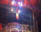 出租海狮表演价格、海洋展报价清单租赁、海洋展出租