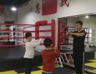 芙蓉区专注青少年 成人散打 搏击 拳击 格斗训练营