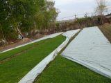 草坪绿化无纺布生产厂家-潍坊无纺布专业供应
