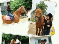 骑马马术教学培训