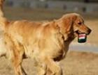 江宁地区上门一对一训犬 训狗师