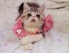 兰州哪里的加菲猫较便宜多少钱一只 兰州哪里有几百块钱加菲猫