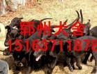 许昌优质黑狼犬价格黑狼犬图片