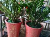 同安千寻花艺管鲜花绿植盆栽价格八折优惠