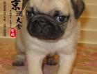 南昌哪里有卖纯种巴哥犬