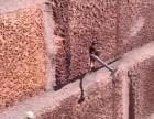 男子将钢钉钉进蜂巢入口,蜜蜂返回后的做法让人不可思议