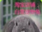 白雪宠物兔(各种垂耳、猫猫、侏儒)