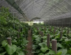 专业室内室外绿植花卉盆景租摆业务批发零售园林绿化养