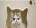 多只**加菲猫宝宝出售中颜色齐全保健康种公对外借配
