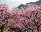 日本赏早樱东京一地迪士尼乐园六天五晚亲子游