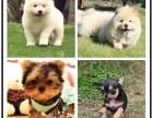 哪里有卖比特犬的 比特犬好养吗 比特一般多少钱