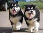 北京哪里有宠物狗卖 北京哪里有狗场 宠物店
