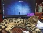 爱猫咪的来找我吧