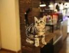 上海哪里有卖猫的宠物店 上海宠物市场上美短价格是多少