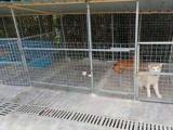 宠物寄养,独门独院环境好,有独立房间