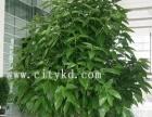 南京柏家园艺花卉租赁、花卉销售、绿化工程等