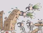 家庭发现白蚁怎么办?灭白蚁方法 广州灭白蚁公司