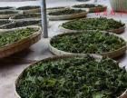 荷叶桑叶茶 垚晖 桑叶茶泡水二加盟 种植养殖