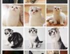猫舍直销波斯 布偶 蓝猫 加菲 美短 折耳 暹罗 英短