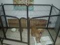 大型犬八片狗笼子低价处理