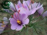 藏红花酸 藏红花素 藏红花提取物 尚诚生物