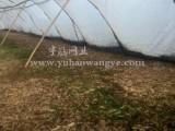 批发养殖隽格蝗虫专用网 结实耐用 塑料蝗虫养殖网