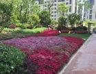绿植物租摆、景观设计、杭州医院各类物业保洁托管