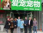 天津新店开张大促销 金毛等各类宠物狗 品种低至300元起售