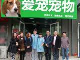 成都實體店 拉布拉多等二十多種小狗 品種最低300元起價