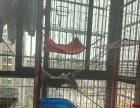 全新的猫笼子转让
