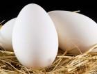 洼刘庄柴鹅蛋网-买放心的鹅蛋-适合大多数男人吃的自己养的鹅蛋