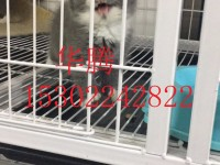 佛山哪里有卖蓝猫蓝白美短英短毛猫异国短毛猫加菲小猫价格金吉拉