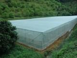 1--4米宽幅防虫网 大棚蔬菜 花卉脐橙哈密瓜防虫网