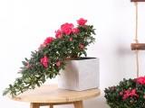 武汉市林业花木盆景公司花卉盆景销售,武汉单位园林商场盆景