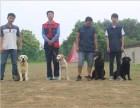 湖南宠物训练