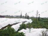 广西柑橘防寒布通风透气