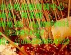 哪里可以学习做地锅鸡地锅鱼小吃培训板面麻辣烫早餐地锅鸡的做法
