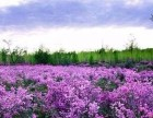 最美达尔滨湖杜鹃花海 神秘阿里河嘎仙洞 湿地公园