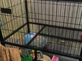 九成新三层大猫笼 自动喂养器 猫砂盆 送几袋猫砂猫粮