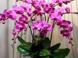武汉市武昌区小东门附近鲜花租赁花坛设计园艺服务找