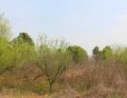 出售京山县土地 适合大型农家乐大型生态养殖投资