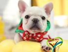 上海闵行区榛果犬业大型宠物基地 品种齐全长期出售法斗柴犬边境